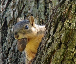 Just Like The Squirrels It S Time To Prepare For Winter