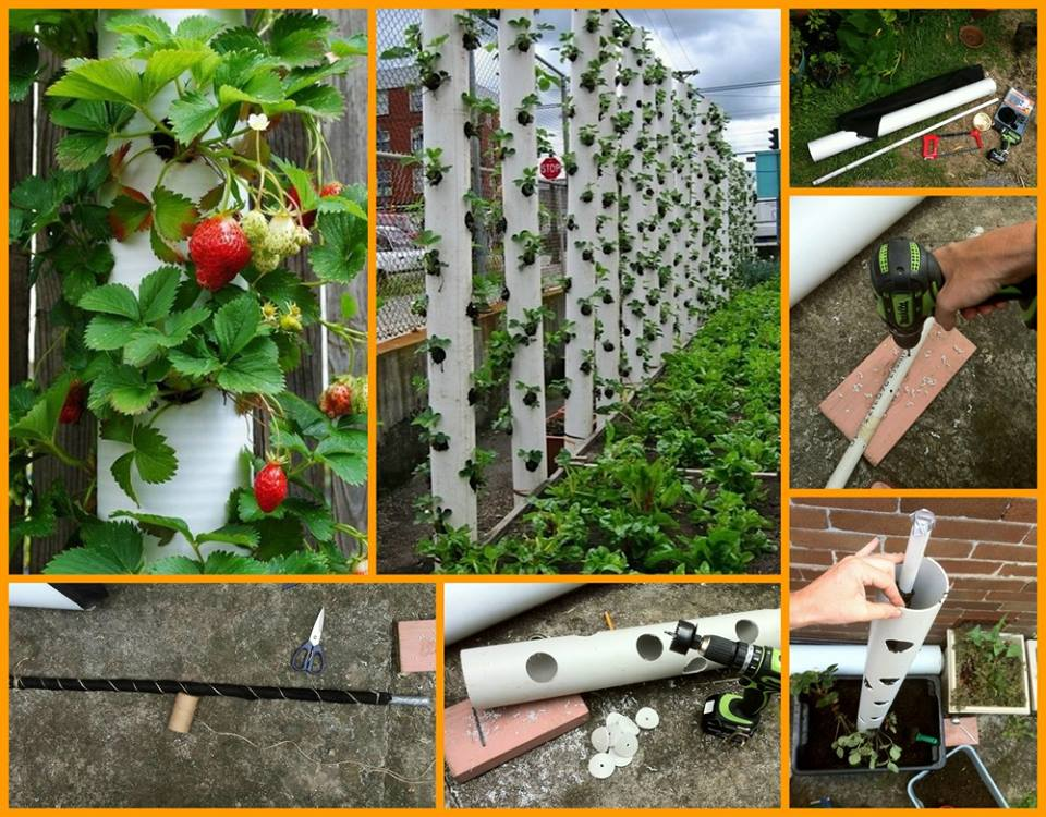 Do It Yourself, How to make your own vertical garden in a small space.