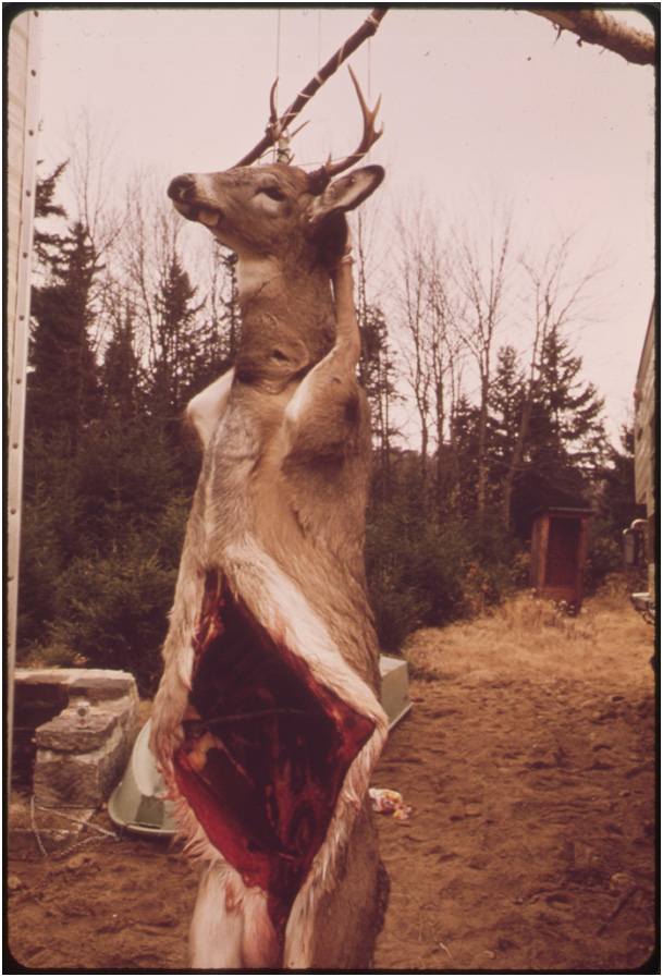 Should you hang wild game kills?