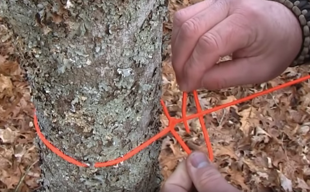 Man tying half hitch knot around a tree